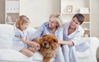 Sunde fordele ved at have hund